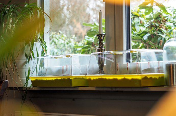 Fensterbankgewächshaus