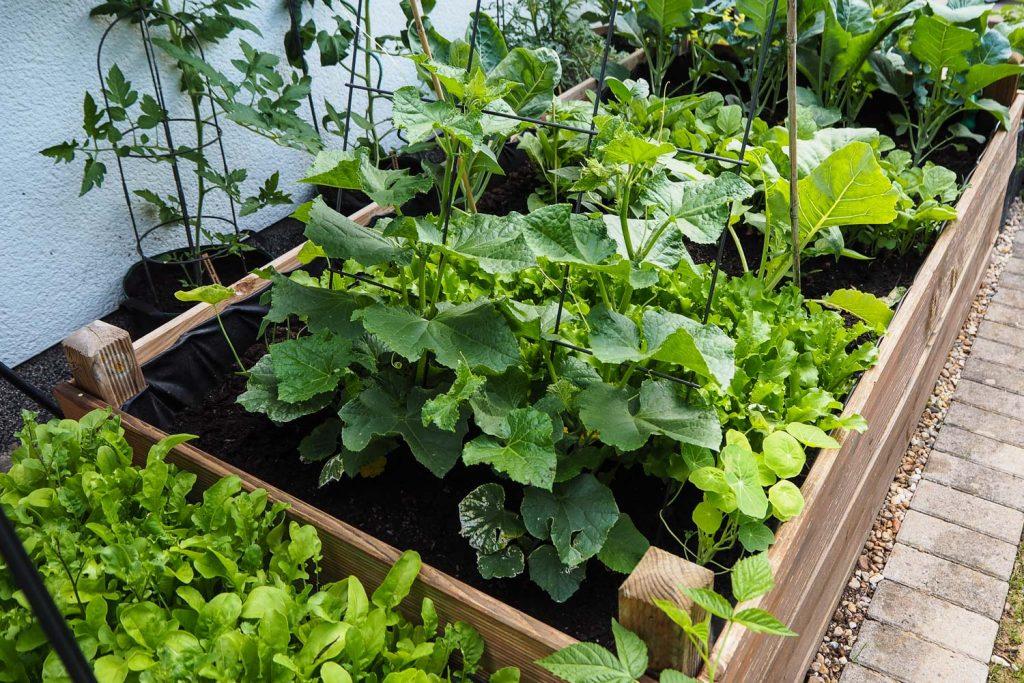 Blattwerk - veganer organischer Dünger