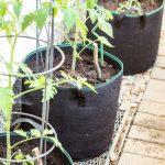 Tomaten im Pflanzsack