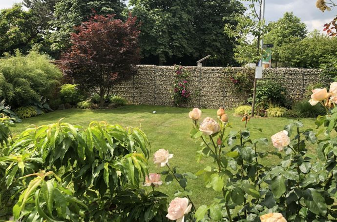 Blick in meinen Garten