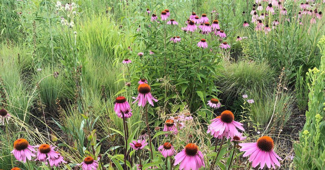Bienenfreundliches Staudenbeet