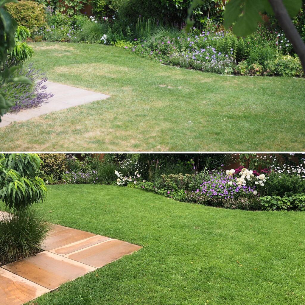 Rasen mit vor und nach Sommerdüngung