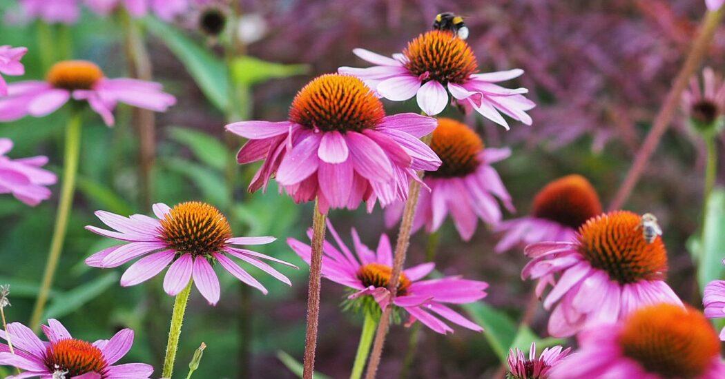 Blühende Vorgärten zu jeder Jahreszeit - ganz einfach!