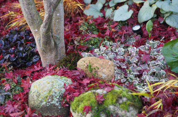 Pflanzen für einen schattigen Vorgarten