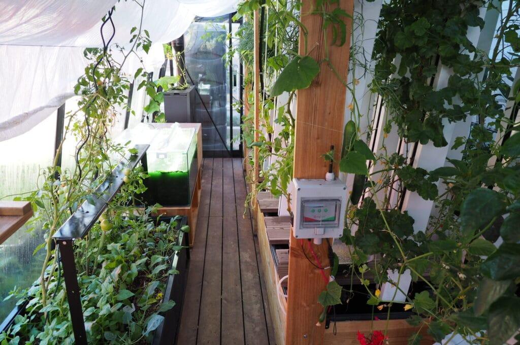 myFood vertikale Beetbepflanzung Gewächshaus